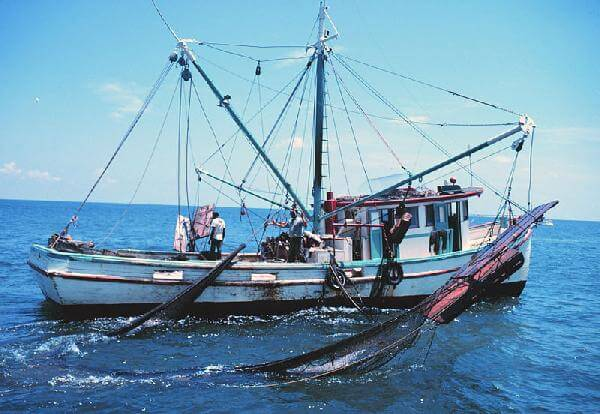 Fishing Vessels Plant  project feasibility